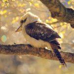 bird-928538_1920